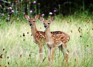 Wildlife In Goa